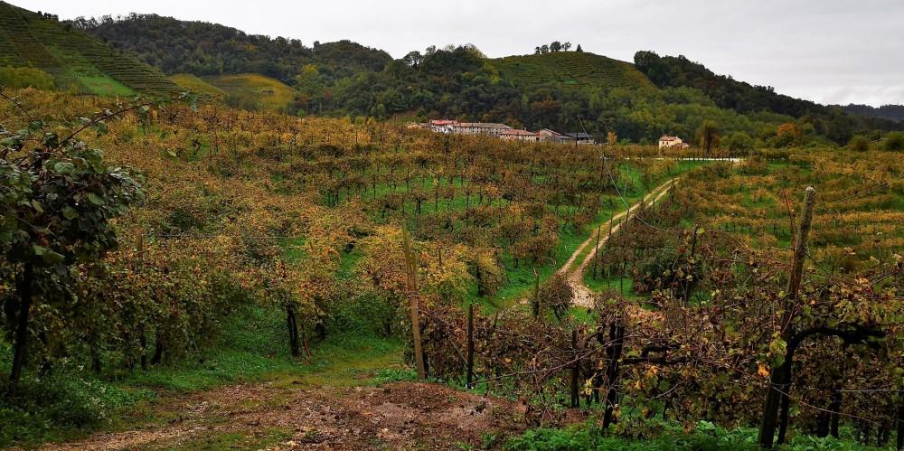 Pogled izpred kleti Pdc na Cartizze vinograde v deževnem dnevu